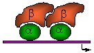 beta cells ROSMARIN