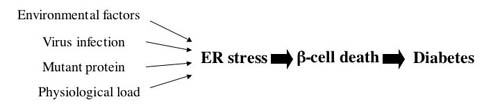 Figure 2: Schematic representation of the role of ER stress in the pathogenesis of diabetes.